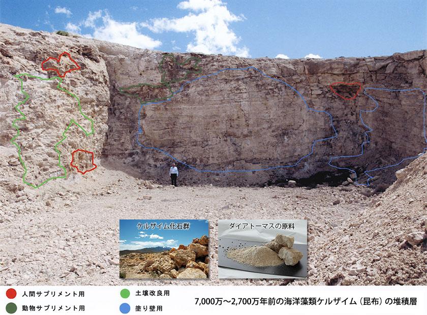 7,000万~2,700万年前の海洋藻類ケルザイム(昆布)の推積層